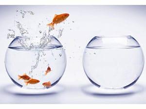 Fish-Jump